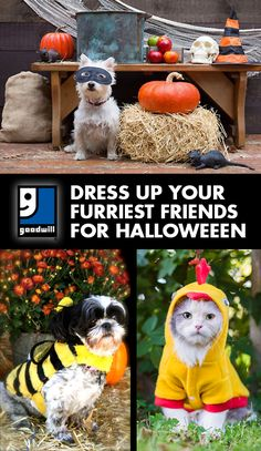 Dress Up Your Furriest Friends for Halloween: Pet costumes are always adorable - here are a few great ideas from Goodwill!