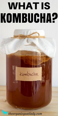 What Is Kombucha? What is a SCOBY? This post is a beginners guide to Kombucha! Kombucha Flavors, Kombucha Recipe, Probiotic Drinks, Kombucha Tea, Fermentation Recipes, Homemade Wine, Winter Drinks, Healthy Drinks, Eating Healthy