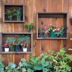box shelves to house potted plants.  Could also hang it on the shed or the side of the house.