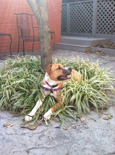 Chew on these ideas for successful gardening with pets!