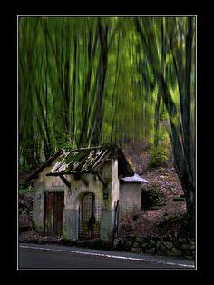 'Aspromonte National Park' (Italy)  By: Raymond Borg, province of Reggio Di Calabria , Calabria region