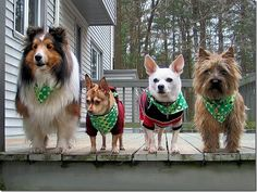 """St. Patrick's and Dirty Harry- makes perfect sense. In some alternate universe. """"I think i have a cute photo, punk (Clint Eastwood voice,)"""" writes Irina G. """"Here it is: """"Participating pets, left to..."""