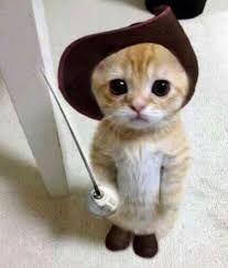 Resultado de imagem para cute cats
