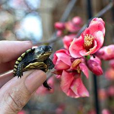 baby turtle in flowers Baby Turtles, Reptiles, Peonies, Flowers, Instagram, Royal Icing Flowers, Flower, Florals, Floral