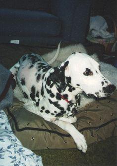 Ringo - post back surgery, December 2004