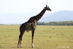 Images of a Journey through Tanzania