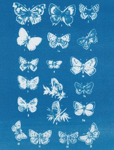 Anna Atkins - Google Search