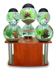 Fish tank by labyrinth. Cleaning is going to be a major problem and a 20% water change! I do love the idea though for stimulation.