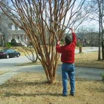 What Should I Prune Now? Grumpy Cuts to the Chase | Your Hub for Southern Culture