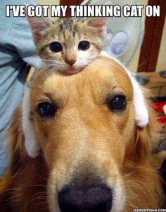I've Got My Thinking Cat On cute animals dogs cat cats adorable dog puppy animal pets kitten funny animals funny pets funny cats funny dogs animal odd couples