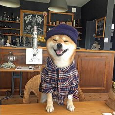 Shiba Inu Berry is enjoying his weekend!