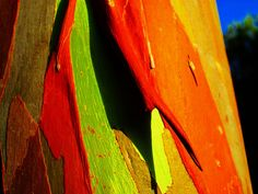 Natural Art 3 by peggyhr - Another rainbow eucalyptus tree! Rainbow Eucalyptus Tree, Tree Story, Fractal, Study Design, Found Art, Tree Bark, Photo Tree, Dark Matter, Patterns In Nature