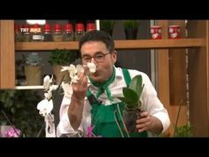 How to Care for Orchid? - Natural Life with Erkan Şamcı - TRT Avaz