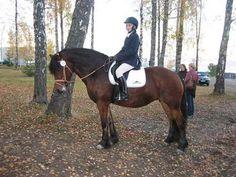 Irja-Marthe Alle hestene våre - Blogg -