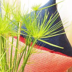 «#minglecushion #muuto #fresh #nature #papyrus #cyperus #kizuku»