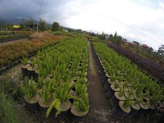 Save your nature, malang - east java
