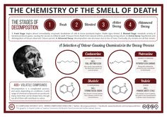 Continuing this week's Halloween theme, today we're looking at death – more specifically, the chemical agents behind the smell of it. Decomposition is an incredibly complicated process, but w…