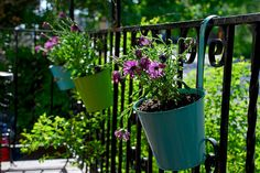 dollar store containers on my porch by kimhasfivecats, via Flickr