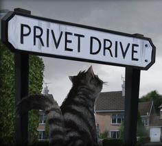 Resultado de imagen para privet drive