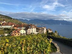 The Lavaux UNESCO World Heritage Vineyards in Vaud. A walk thrugh one of the most scenic areas of Switzerland with the terraced vineyards. Places To Travel, Places To Visit, Walking Routes, Lake Geneva, 11th Century, Going On Holiday, World Heritage Sites, See Photo, Switzerland