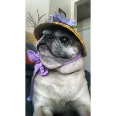 """Springtime pug. She looks like a """"Harriett"""", maybe because my grandma (also Harriett) liked that color."""