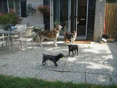 Riley , Boxer , Rolo and Molly- Photo Sharing!