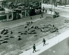 Pigs loose in the street at Thirteenth and Market Streets. (1903)
