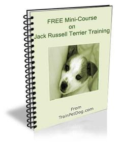 Jack Russell Terrier: Training Tips For Jack Russell Terrier Dog Breeds Terrier Dog Breeds, Terrier Puppies, Terriers, Jack Russell Puppies, Jack Russell Terrier, Training Your Dog, Training Tips, Dog Breeds Little, Animal Nutrition