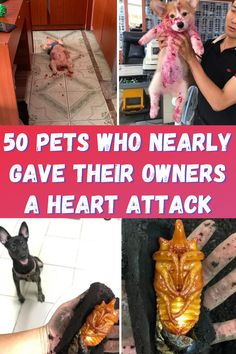 Cats, dogs, or any other pets are a source of joy for all of us. But sometimes our faithful animal friends can be really scary. Check out these 50 spooky, creepy, and downright funny pets to see what we mean. Angel Wallpaper, Flower Phone Wallpaper, Funny Facts, Funny Jokes, 9gag Funny, Memes Humor, Acrylic Nails Coffin Pink, Punny Puns, Interior Design Website