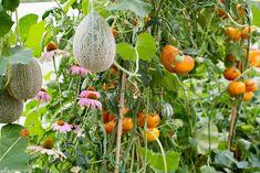 Flori ce atrag polenizatorii în grădină - gardenbio.ro Home And Garden, Organic, Vegetables, House, Home, Vegetable Recipes, Homes, Veggies, Houses