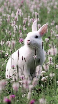 easter - white rabbit in flower field