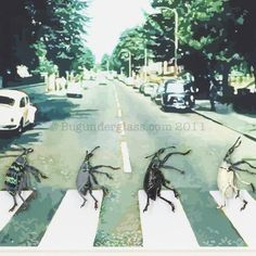 The Beatles http://www.bugunderglass.com/Bug-Blog_files/beatles-abby-road.jpg