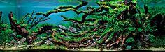 O aquascaping (ou aquarismo) é o nome de uma arte que requer paciência e dedicação. O Hypeness fez uma cuidadosa seleção de interiores de aquários que mais parecem paisagens naturais.