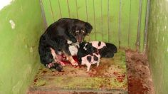 End Torture, Death & Corruption at Bulgarian Municipal Dog Shelters Hell! | Please SIGN and share petition. Thanks.