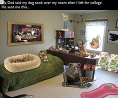 35 Hilarious Parents Who Live Life Like It's One Big Joke Funny Animal Pictures, Funny Images, Funny Photos, Best Funny Pictures, Funny Animals, Humorous Pictures, Animal Pics, Dog Pictures, Big Joke