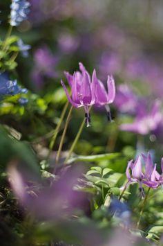 花の小道で : ふつうのコト                                                       …