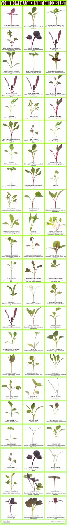 Your Home Garden Microgreens List