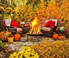 Plan for All Seasons plan for Fall and winter by planting color changing foliage and deciduous specimens that add interesting structure even when bare of leaves