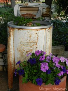 Wringer washing machine and petunias (1) From: Moonlight Rainbow, please visit
