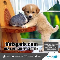 10dayads.com has a pet supply section. #PetClassifiedAds #freeadvertisingsitesusa