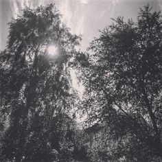 Две башни (и Фонарь) / The two towers (and a Flashlight) #spb #saintpetersburg #stpetersburg #pushkin #blackandwhite #tree #sun #foto #спб #санктпетербург #питер #пушкин #природа #природагорода #деревья #чернобелое #солнце #фото
