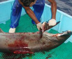 Billionaire Richard Branson calls on President Laura Chinchilla to ban shark-finning