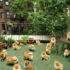 """Sorry, the outside area is closed today due to an infestation of pomeranians."""