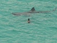 18 Close Encounters With Sharks Caught On Camera, the water became disclosed 10 seconds after this photo, I believe it was shark repellent. Shark Week, Basking Shark, Sea Shark, Shark Bait, Close Encounters, Great White Shark, Mundo Animal, Megalodon, Ocean Life