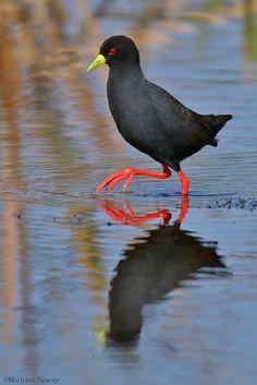 Birds GALLERY - Google+