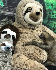 It's International Sloth Day, So Look At These Slow Precious Babies Cute Baby Sloths, Cute Baby Animals, Funny Animals, Wild Animals, Baby Otters, Baby Sloth Pictures, My Spirit Animal, Beautiful Creatures, Hilarious Animals
