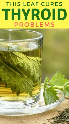 This Leaf Cures Thyroid Problems Permanently! - Health and Remedies Thyroid Cure, Thyroid Diet, Thyroid Health, Thyroid Issues, Thyroid Disease, Natural Treatments, Natural Remedies, Herbal Remedies, Nettle Leaf Tea