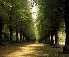 Lime Tree Avenue, Clumber Park, Worksop, Nottinghamshire