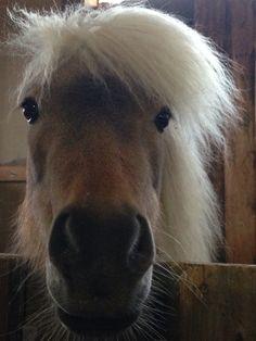 Country Home Farm's ponyta!