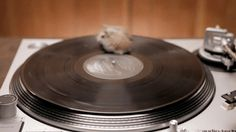 Something not seen often these days rodents on turntables : )